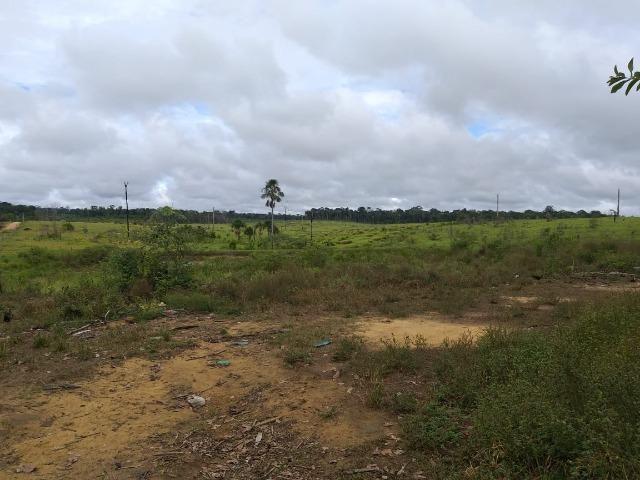imperdivel fazenda em roraima 480 ha- caroebe vic 08