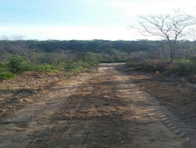 Fazenda à venda, * m² por R$ 12.500.000,00 - Zona Rural - Pilão Arcado/BA - Foto 5