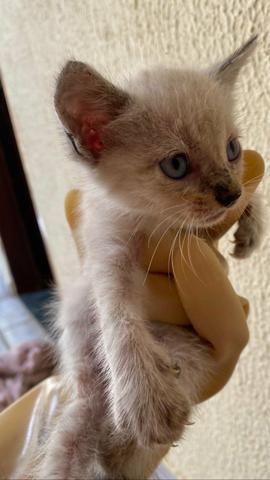 Gatinhos para adoção! - Foto 3