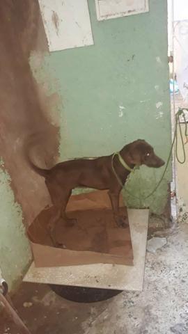 Doação de pet (cachorro) - Foto 4