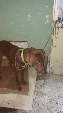 Doação de pet (cachorro)
