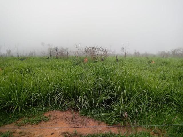 Vendo Fazenda em Novo Prigresso/PA - Foto 8
