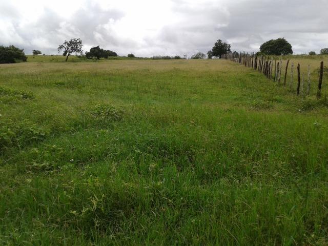 Fazenda com 63 há em brejinho, 10 barreiros, curral - Foto 7
