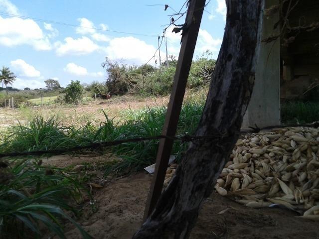 Fazenda com 62 há na br 304, com rio potengi, casa, deposito - Foto 3
