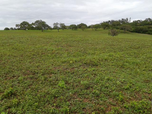 Fazenda com 63 há em brejinho, 10 barreiros, curral - Foto 19