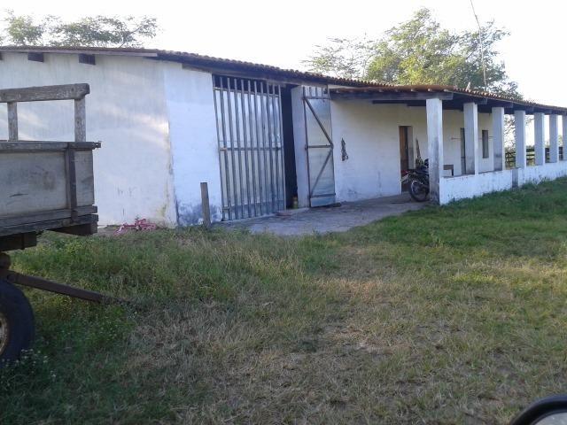 Fazenda com 290 há, casa, curral, 4 barreiros, muito pasto - Foto 16