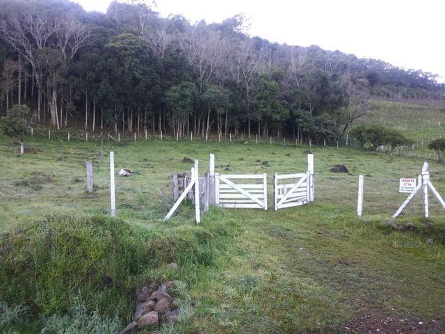 2.7 ha. linda chacara a apenas 7.5 km do centro de farroupilha - Foto 2