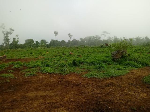 Vendo Fazenda em Novo Prigresso/PA - Foto 4