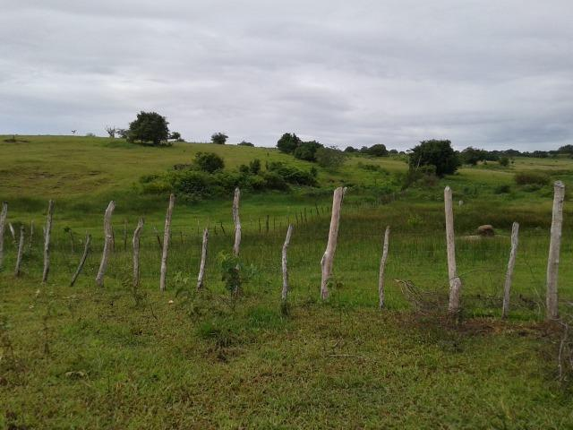 Fazenda com 63 há em brejinho, 10 barreiros, curral - Foto 3