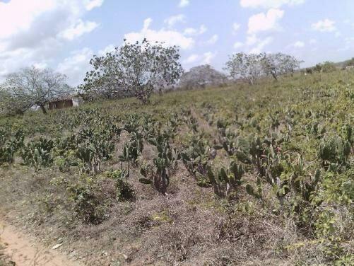 Terra no Sítio Lagoa Redonda Zona Rural de São Pedro RN What * - Foto 3