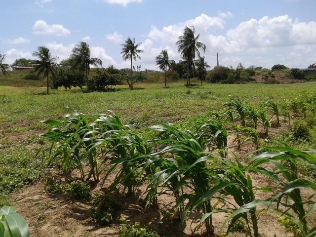 Fazenda com 62 há na br 304, com rio potengi, casa, deposito - Foto 16