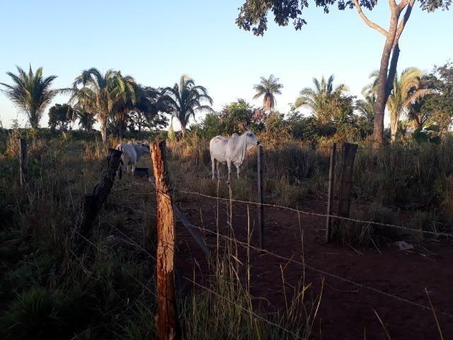 Chácara a 11 km de Acorizal - Foto 12