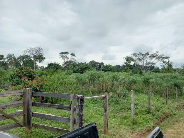 Chacara km 11  - Foto 4