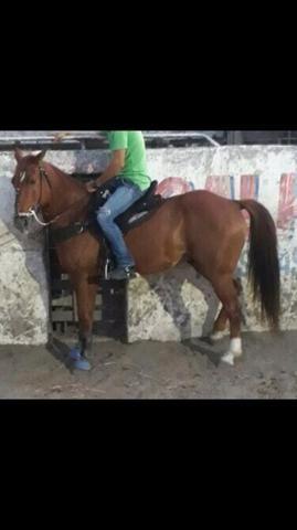 Cavalo QM de Direita