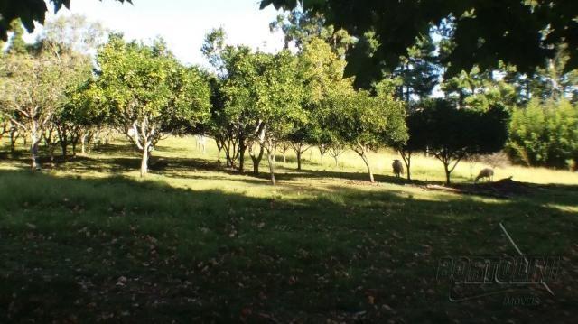 Chácara à venda em Sitio nono zonta, Passo fundo cod:8465 - Foto 6