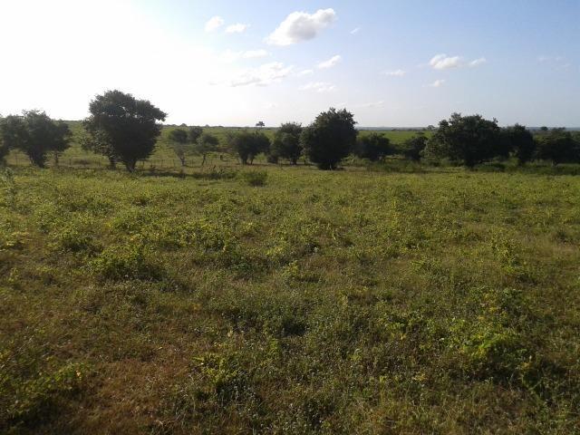 Fazenda com 290 há, casa, curral, 4 barreiros, muito pasto - Foto 10