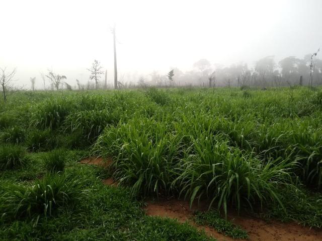 Vendo Fazenda em Novo Prigresso/PA - Foto 17
