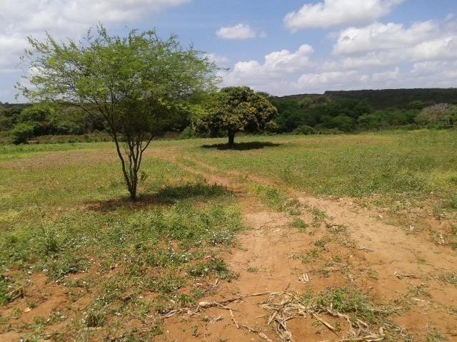 Fazenda com 62 há na br 304, com rio potengi, casa, deposito - Foto 7