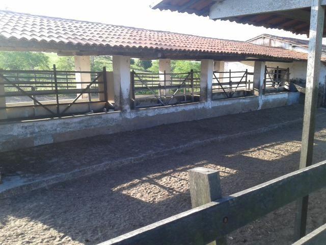 Fazenda com 290 há, casa, curral, 4 barreiros, muito pasto - Foto 4