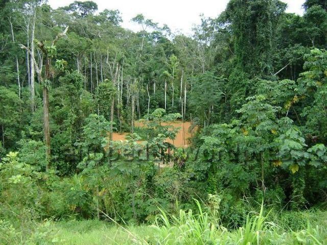 Fazenda de 11.250.000 hectares na AM 010 - Foto 3