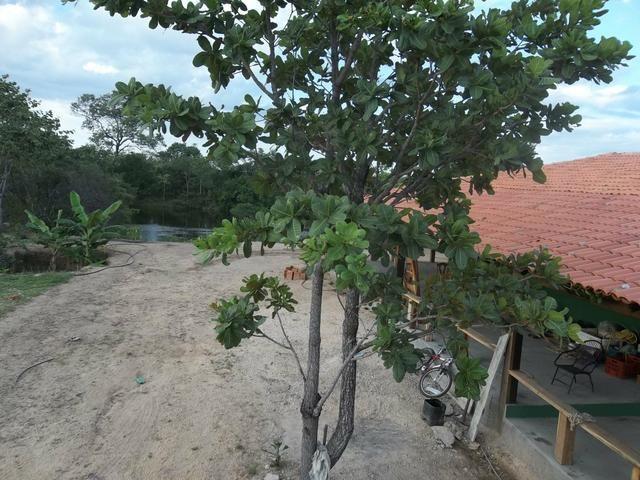 Fazenda com 6.000Ha à margem do Rio Preto! Em Mansidão BA. A 60km de Santa R. de Cassia - Foto 14