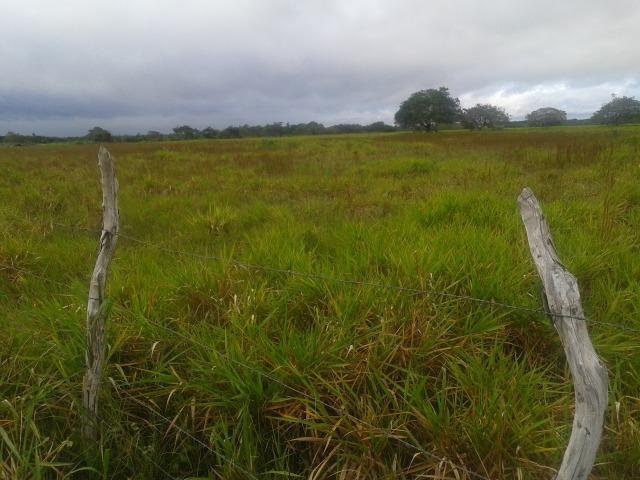 Fazenda com 110 há a 20 km de macaíba, 4 casas, 3 poços, riacho, barreiro - Foto 3