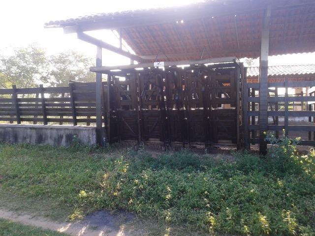 Fazenda com 290 há, casa, curral, 4 barreiros, muito pasto - Foto 9