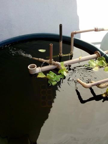 Aquaponia - Foto 2