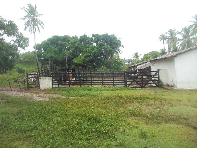 Fazenda com 110 há a 20 km de macaíba, 4 casas, 3 poços, riacho, barreiro - Foto 14