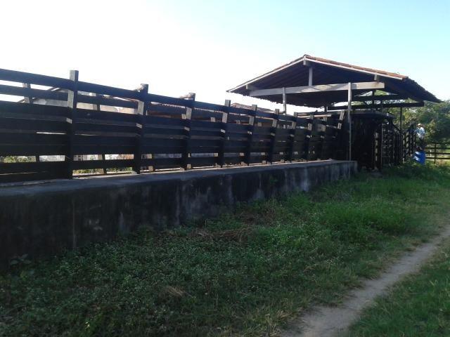 Fazenda com 290 há, casa, curral, 4 barreiros, muito pasto