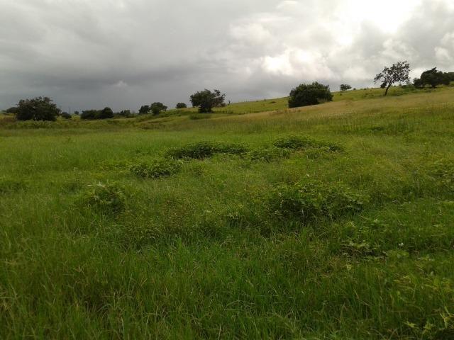Fazenda com 63 há em brejinho, 10 barreiros, curral - Foto 6