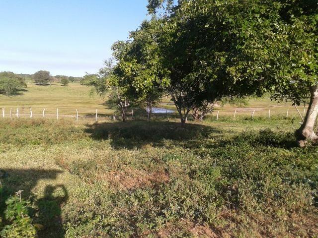Fazenda com 290 há, casa, curral, 4 barreiros, muito pasto - Foto 15