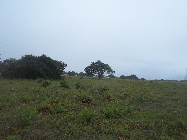 Fazenda com 110 há a 20 km de macaíba, 4 casas, 3 poços, riacho, barreiro - Foto 19