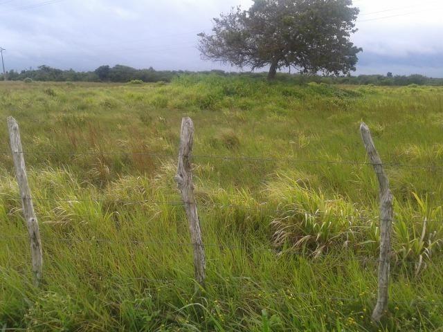Fazenda com 110 há a 20 km de macaíba, 4 casas, 3 poços, riacho, barreiro - Foto 10