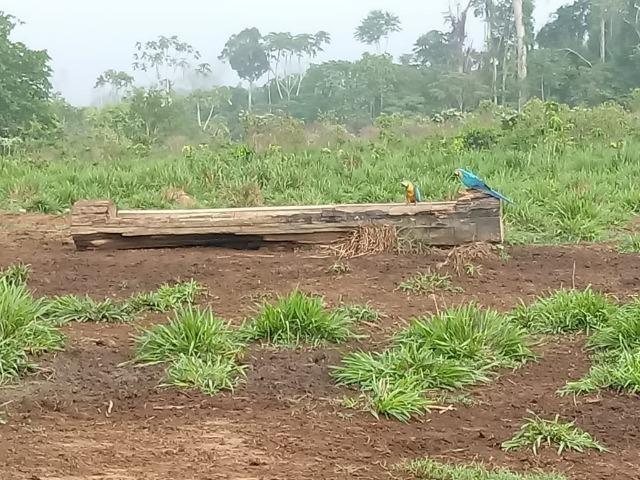 Vendo Fazenda em Novo Prigresso/PA - Foto 12