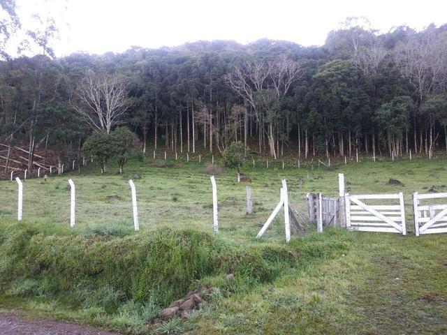 2.7 ha. linda chacara a apenas 7.5 km do centro de farroupilha - Foto 4