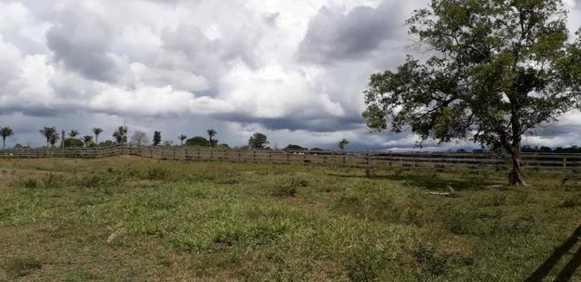 fazenda em roraima 300 ha - caroebe