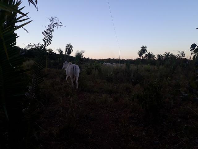 Chácara a 11 km de Acorizal - Foto 3