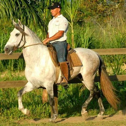 Cursos de equitação e doma