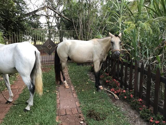 Cavalo Manga Larga - Foto 3