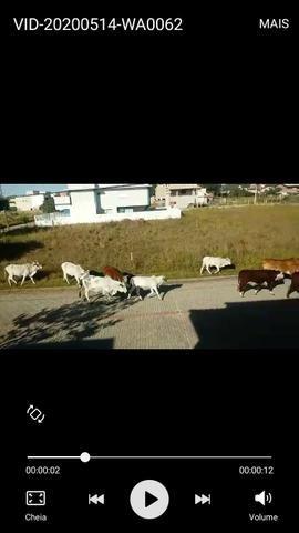 Vacas - Foto 3