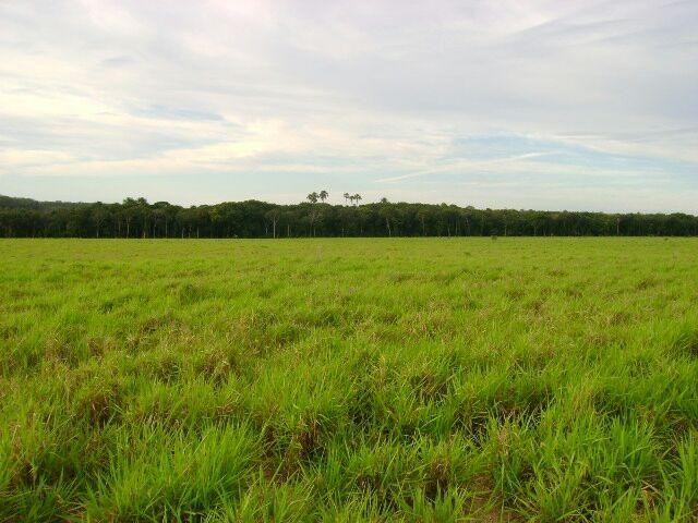 Fazenda em Pedro Afonso - 270 km Distante de Palmas