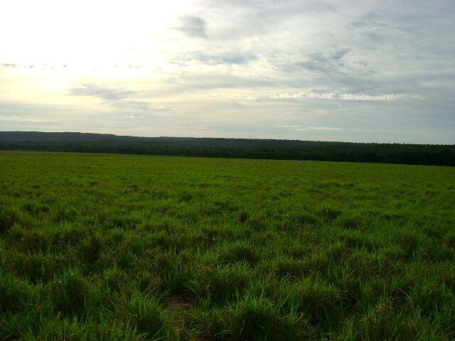 Fazenda em Pedro Afonso - 270 km Distante de Palmas - Foto 2