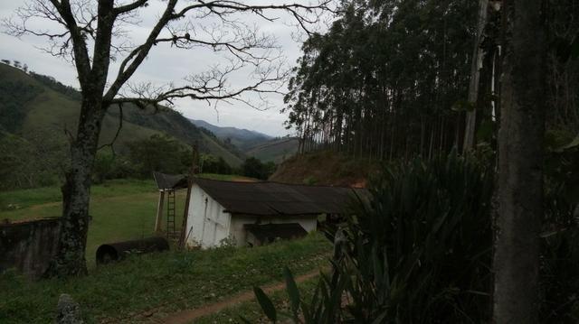 Fazenda com 400.000 Pés de eucaliptos,566 hectares - Foto 3