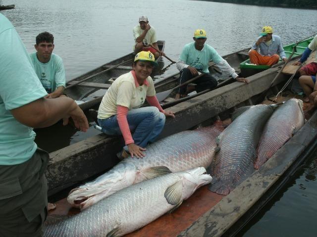 Fazenda na amazônia 913.000 hectares - Foto 17