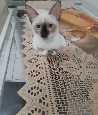 Adoção Responsável de Gato Macho - Foto 2