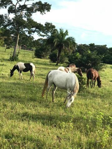 VENDO SÍTIO 22,6 Alq. próximo de Itapirapuã e Águas de São João- Goiás R$2Milhões - Foto 2