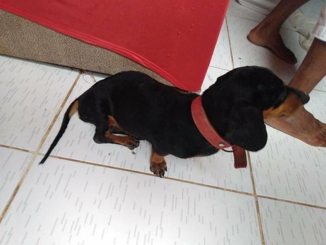 Doação responsável, cadelinha precisando de cuidados - Foto 4