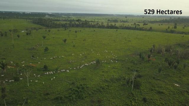 Fazenda no município de Cujubim com 529 hectares - FA0033