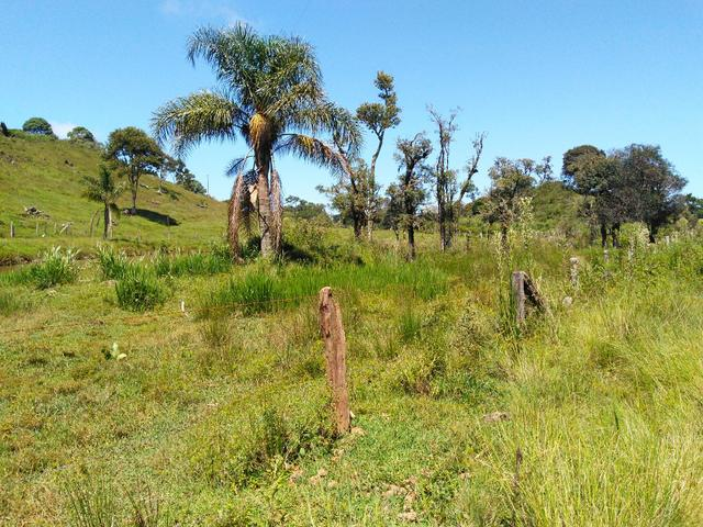 Fazenda de 123 Alqueires .40 Alq de Pasto . Guará ( Guarapuava PR ) - Foto 19